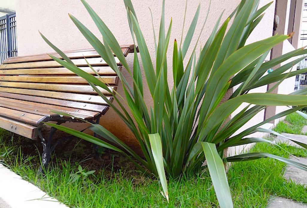 formio-variegata