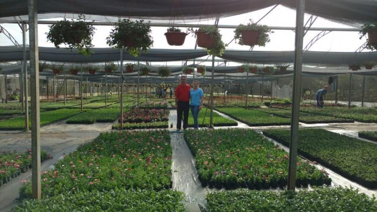 Nico Plantas e Flores