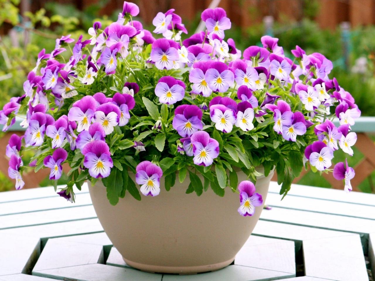 Resultado de imagem para flor no vasinho