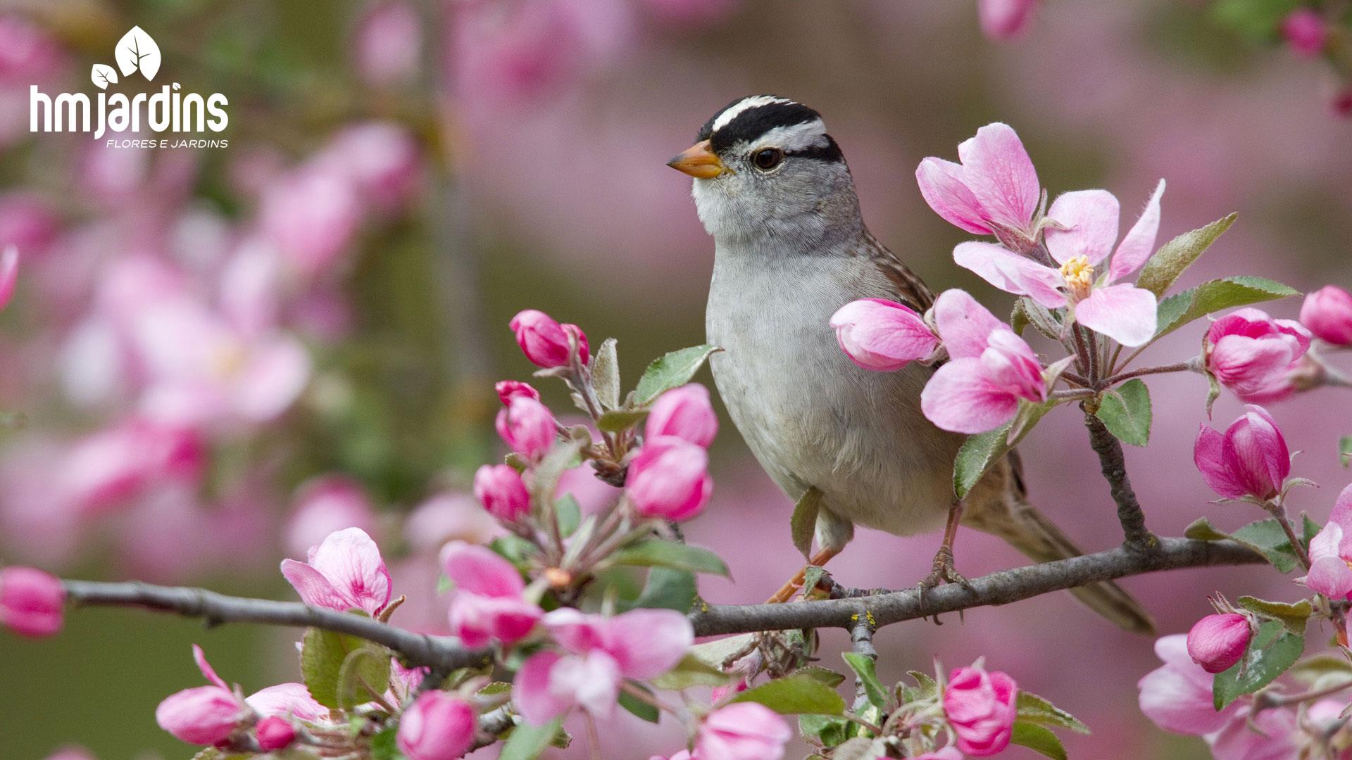 atrair-pássaros-jardim