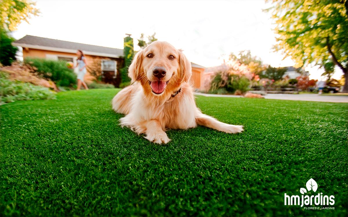 cachorro-jardim