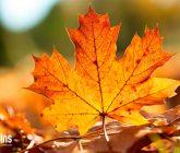 cuidar-plantas-outono