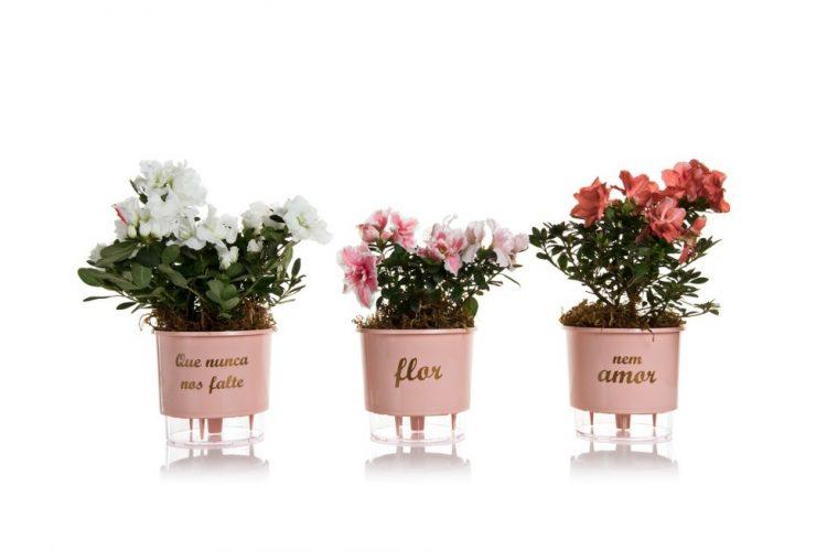 Vasos Autoirrigáveis Flor e Amor – Rosa Quartz