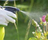Ferramentas básicas para cuidar do jardim – Pulverizador