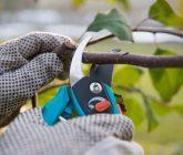 Ferramentas básicas para cuidar do jardim – Tesoura especializada