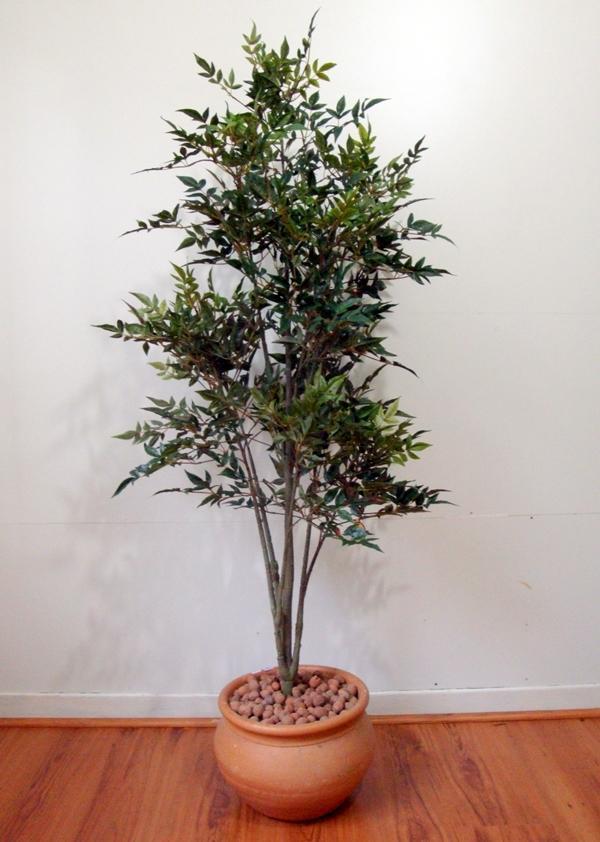 Árvore da Fortuna que trazem benefício para sua casa