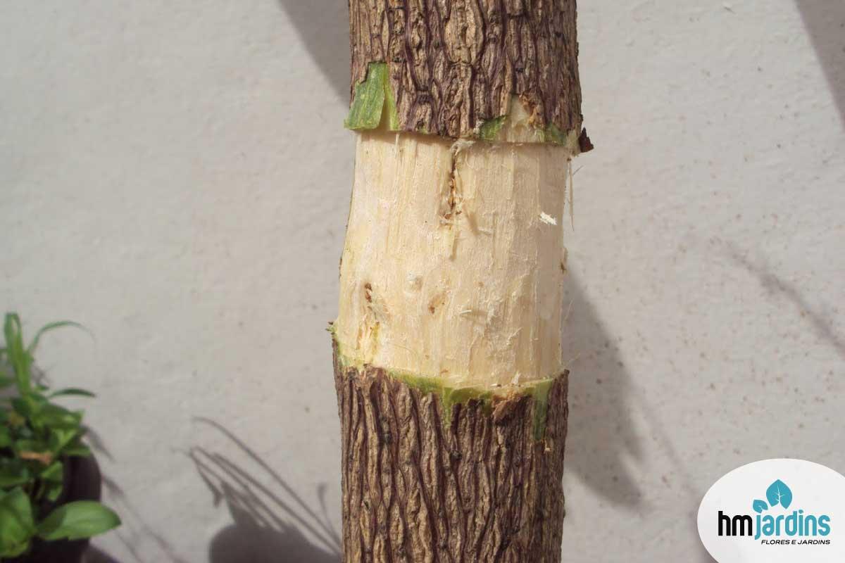 Capa-post-bougainvillea-alporquia-