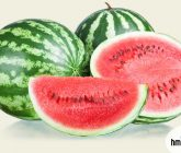 capa-melancia