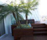 palmeira3