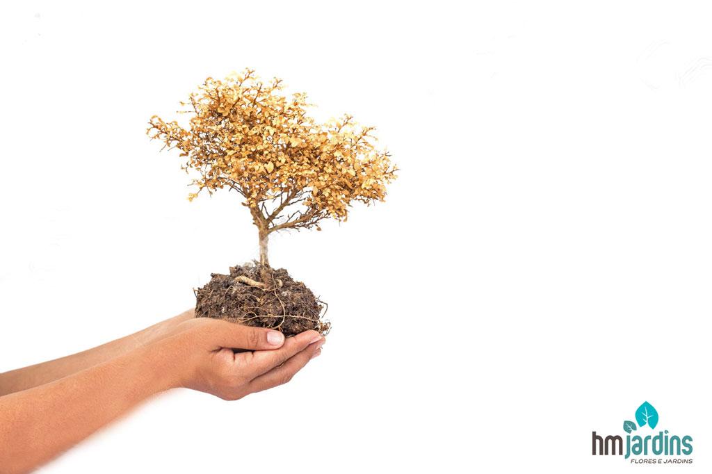 planta-seca
