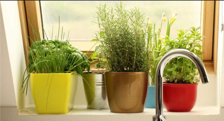 dicas-para-cultivar-uma-horta-em-casa3