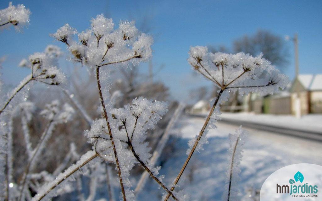 planta-frio1
