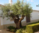 oliveira-capa1