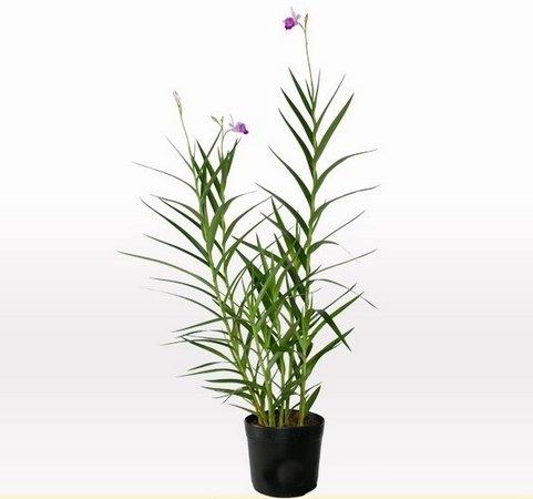 orquidea-bambu