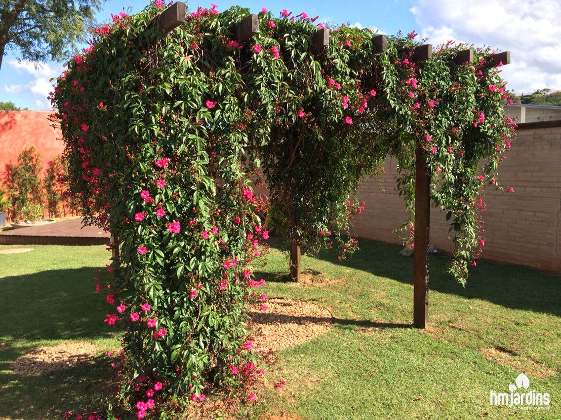 plantas-para-seu-pergolado-hm-jardins