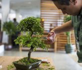 bonsai-de-jabuticabeira-blog-hm-jardins