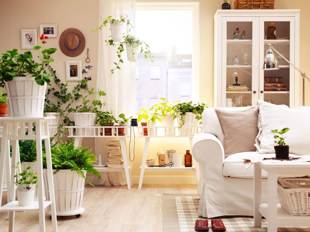 plantas-na-sala-